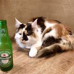 Cat Cafe てまりのおうち - 「正解者は私と一緒にビールが飲めるわよ」