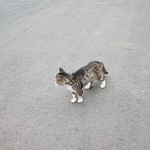 111825030 - 駐車場の猫