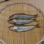 霜止出苗 - 北海道の鮎