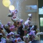 めし処 なかなか - 熱帯魚の水槽