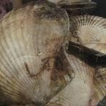 市場食堂 さかなや - 『活ホタテ海鮮ゴロゴロ焼』海の幸をさかなや流【豪快】にいれました