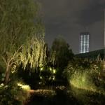 エー ピッツァ - 夜の屋上の柳...、と工事中の新しいビル...