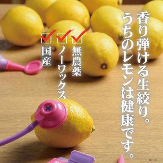 選べるレモンサワー♥しんちゃんのレモンは全て国産レモン★