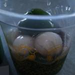 東山茶寮 - 濃いお茶を注ぐ前