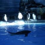 トータス - ペンギン