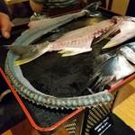魚我志 むさし - お刺身にした魚をお披露目