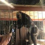 アウルの森 - 賢いお猿さん
