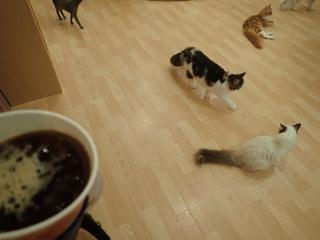 猫カフェ ぷちまりー ラソラ札幌店 - アイスコーヒーすすりながらニャンコタイム