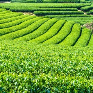 お茶やお酒など、自慢のドリンクも種類豊富にご用意!