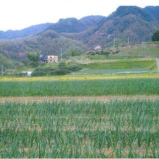 岡山県の自家農園で育てる農薬不使用のお野菜が美味