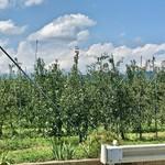 114792686 - 周囲はりんご畑です