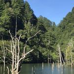 ふもと屋 - 自然湖