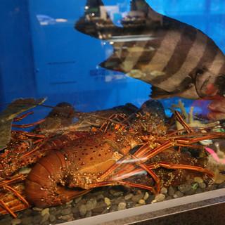 広東料理の要である海鮮の目利きは妥協なし