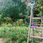 ミツバチガーデン カフェ - ガーデン
