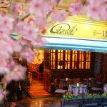 Cafe Restaurant AUREOLE - オリオールのお店の前には桜の木が立ち並びます。桜を見ながらテラス席はいかがですか?