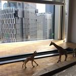 ハンズカフェ - 棚のキリン(後ろに阪急百貨店)