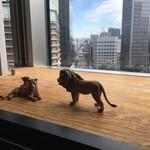 ハンズカフェ - 棚のライオン