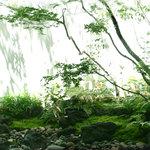 OKU - 夏の庭