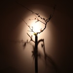 すし ふくづか - 木瓜の花