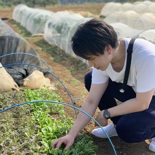 自家農園で育てたこだわり野菜