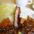 キッチン ラッキー - 料理写真:カツハヤシライス