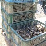 谷川水産 - 浦村牡蠣がいっぱい