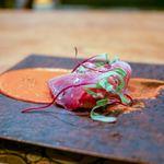 アラルデ - ☆気仙沼の鰹
