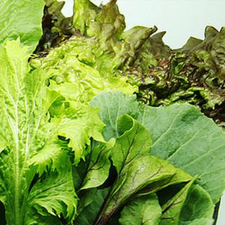 野菜食べ放題♪日替わりのサンチュバー