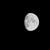 青柳 - その他写真:舊暦(もとのこよみ)九月十一日の月(つき)
