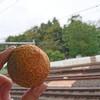 ベーカリーカフェ 明治堂 - 料理写真:おからドーナツ
