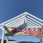 117778656 - 亀岡市郊外の、夢コスモス園。