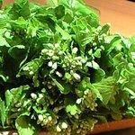 たがみ - 花山葵の季節です