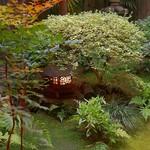 飯田 - ☆お庭も素敵です(●^o^●)☆