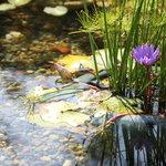 カフェ ジャルディーノ ピッツァリア - 玄関前の池には、色々な水辺の生き物がお出迎え♪