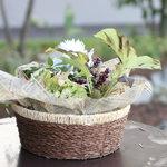 カフェ ジャルディーノ ピッツァリア - 四季折々の植物が咲くお庭です。