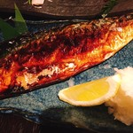 魚のタナ -