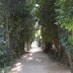 1188757 - おまけ。昼間のフク木並木
