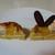 パティスリー クグラパン - 料理写真:クグラパン(断面)