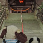 味司 野村 - ううむ、なんだか神秘的な感じ・・・ここは吉備国の総鎮守で、岡山県内で最も古くて大きな神社なんだよ。ちらみに、拝殿に続くこの石段はパワースポットとして有名なんだって。