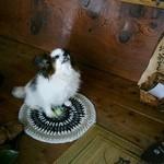 若松屋 - 女将さまの愛犬です
