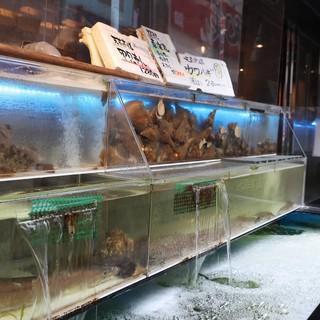 天草の漁師から直送する旬の魚貝が絶品です!!