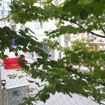 ビストロ ラ プッペ - 窓から景色