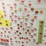 フルーツパーラーフクナガ - リンゴの家系図 ちょっとピンぼけ