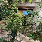 120176749 - 店内の観葉植物