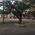 120270266 - 駅前『松本清張』の『点と線』で有名な木