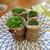 須崎屋台かじしか - 料理写真:「博多のネギ巻き」(¥230)