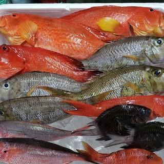 新鮮鮮魚で自慢の料理