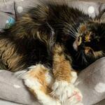 フーデリー - 八代市の友人が連れて来てる猫。名前はエル。部屋内に5匹の猫がいるナウ。猫密度たかっ!