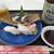 源 - 料理写真:しゃこ貝&夜光貝&オリオンビール