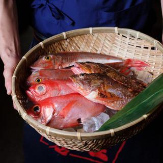 漁港直送の鮮魚